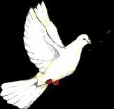 La paloma con el ramo de olivo es un símbolo de la paz